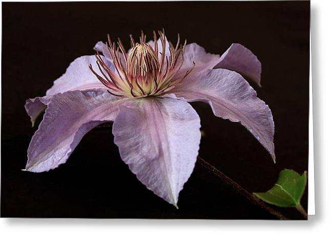 Greeting Card featuring the photograph Clematis by Shirley Mitchell