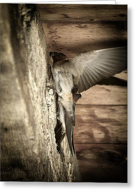 Cliff Swallows 2 Greeting Card by Scott Hovind