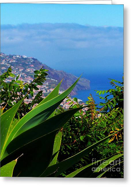 Cliffs Of Madeira Greeting Card by Patricia Land