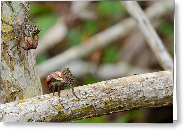 Climbing Crabs Greeting Card by Mike Rivera
