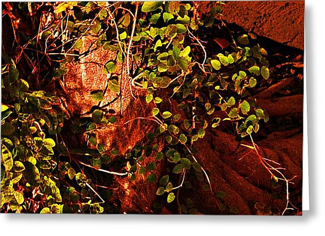 Climbing Magic Plant Greeting Card by Susana Sanchez Giraud