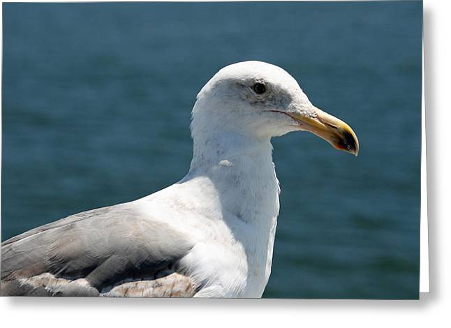 Close Seagull Greeting Card by Wendi Curtis