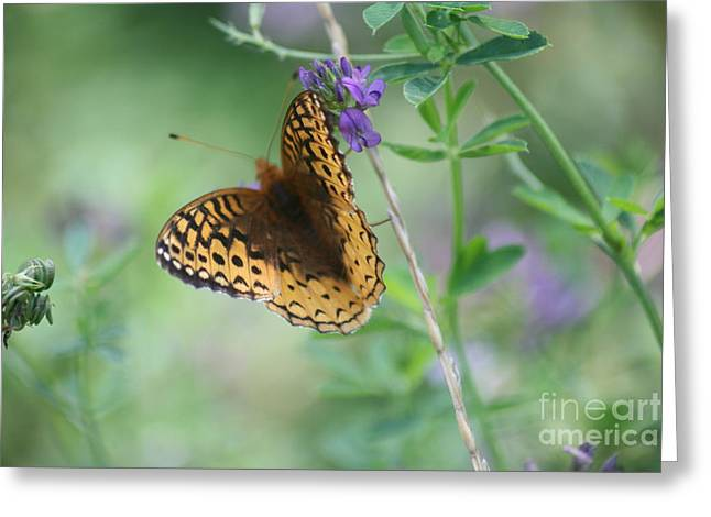 Close-up Butterfly Greeting Card