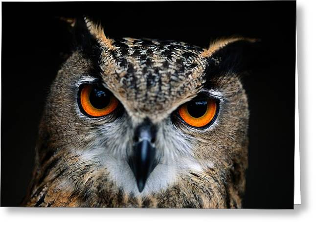 Close Up Of An African Eagle Owl Greeting Card by Joel Sartore