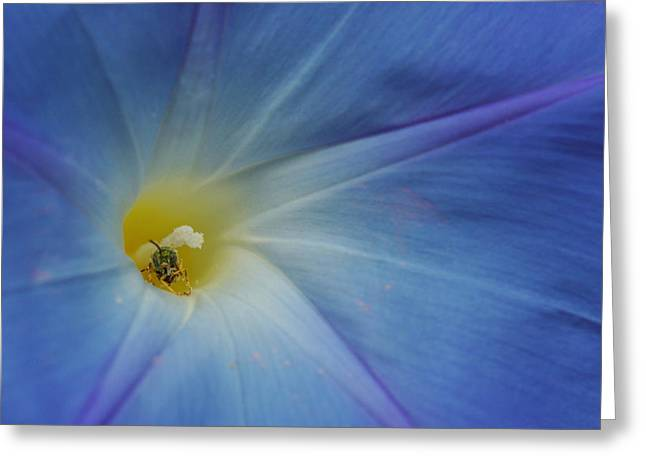 Close Up Of Morning Glory Flower Greeting Card
