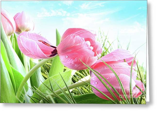 Close-up Of  Spring Tulips  Greeting Card by Sandra Cunningham