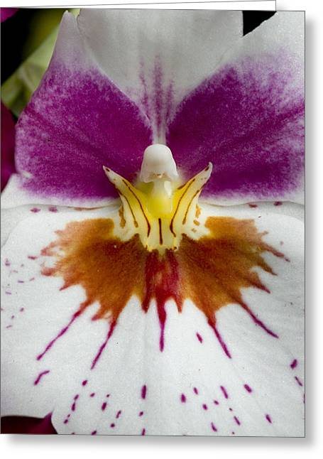 Close-up Of The Center Of An Orchid Greeting Card by Todd Gipstein