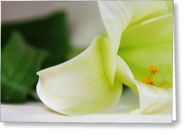 Close-up On White Lilies Greeting Card by Gal Ashkenazi