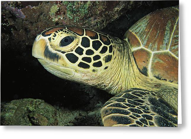 Close View Of A Sea Turtles Head Greeting Card