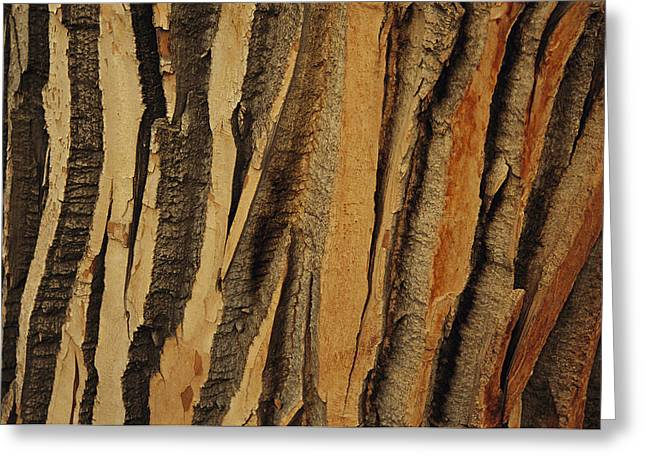Close View Of Bark On An Old Growth Greeting Card