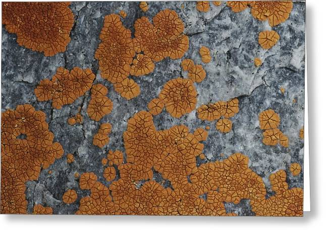 Close View Of Orange Lichen Growing Greeting Card by Stephen Sharnoff