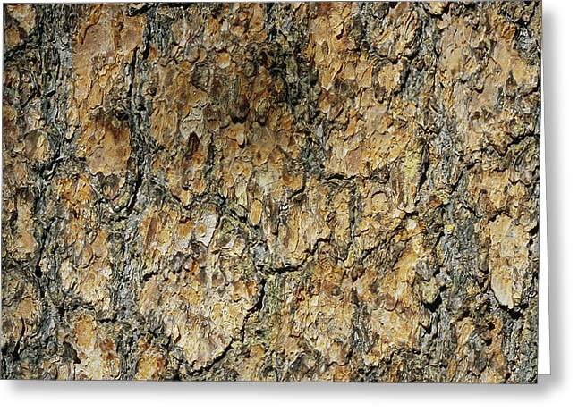 Close View Of Whitebark Pine Tree Bark Greeting Card by Marc Moritsch