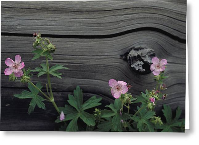 Close View Of Woodland Wildflowers Greeting Card