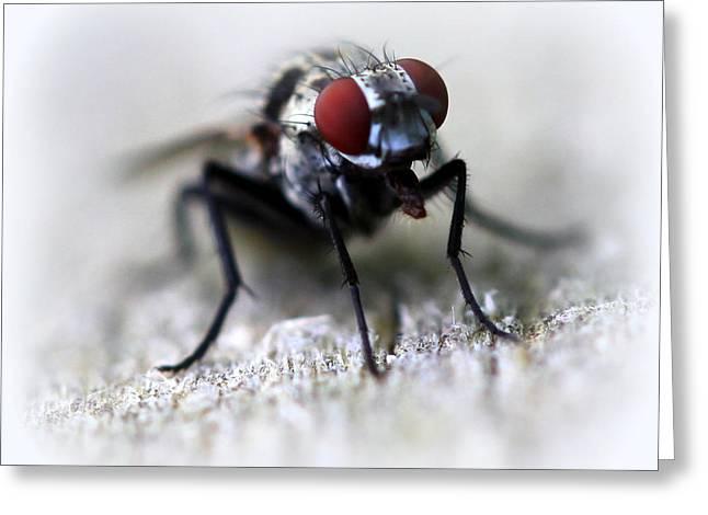 Closeup Of A Fly  Greeting Card by Maureen  McDonald