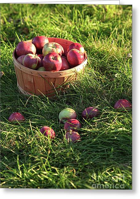 Closeup Of Freshly Picked Apples  Greeting Card by Sandra Cunningham