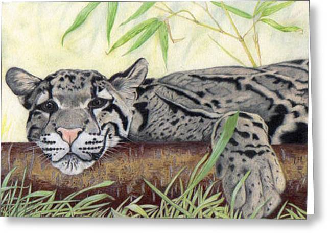 Clouded Leopard Greeting Card by Inger Hutton