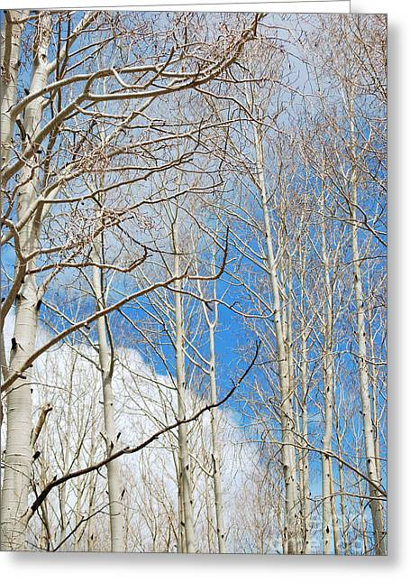 Cloudy Aspen Sky Greeting Card by Donna Greene