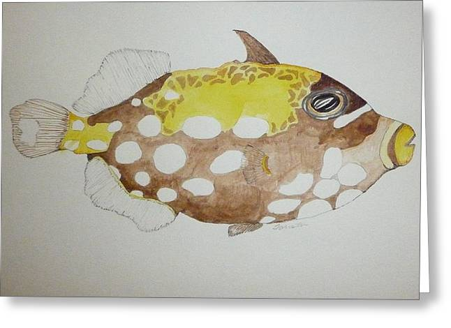 Clown Triggerfish Greeting Card by Tim Forrester