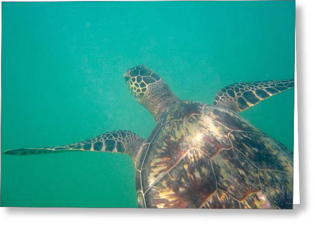 Clyde The Hawaiian Sea Turtle Greeting Card by Erika Swartzkopf