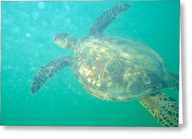 Clyde The Sea Turtle Greeting Card by Erika Swartzkopf