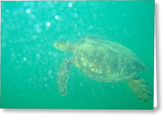 Clyde The Turtle Three Greeting Card by Erika Swartzkopf