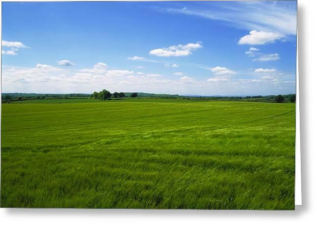 Co Kildare, Ireland Grassy Field Greeting Card