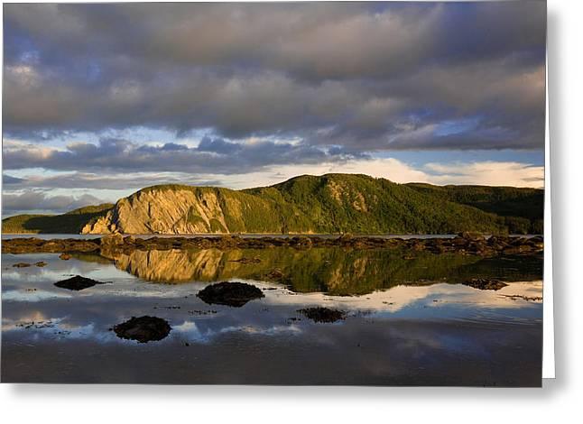 Coastal Cliffs In Evening Light Greeting Card by John Sylvester