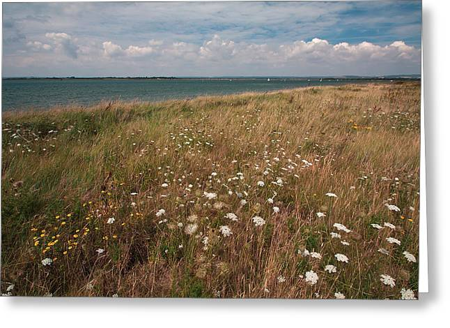 Coastal Flowers Greeting Card by Shirley Mitchell