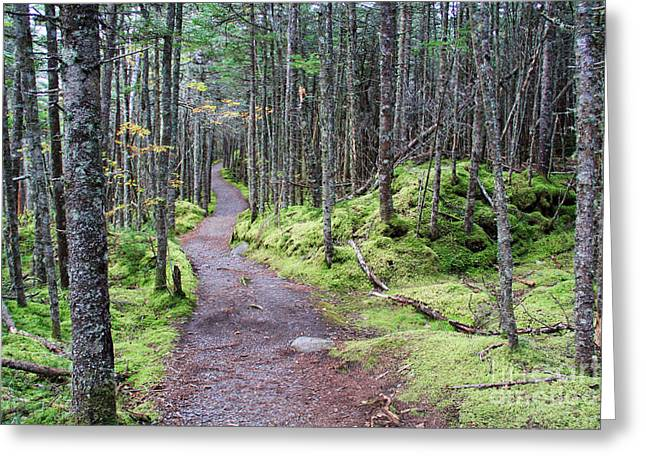 Coastal Trail At Quoddy Head State Park Greeting Card by Jack Schultz