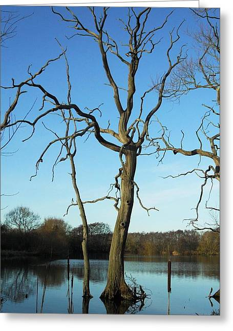 Coate1 Greeting Card