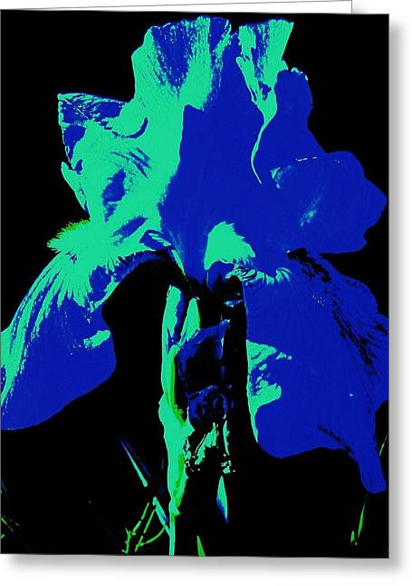 Cobalt Iris Greeting Card by Todd Sherlock