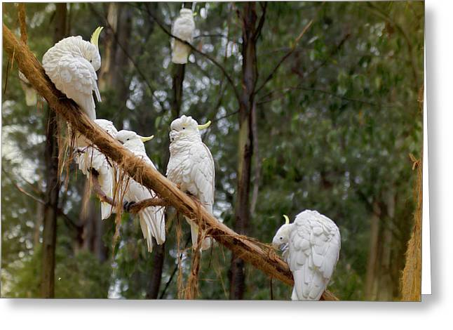 Cockatoo Gathering Greeting Card