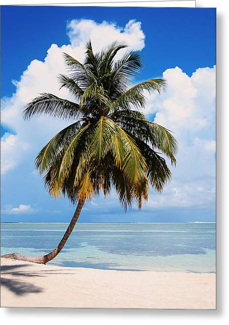 Coconut Palm Tree On The Beach.maldives Greeting Card by Jenny Rainbow