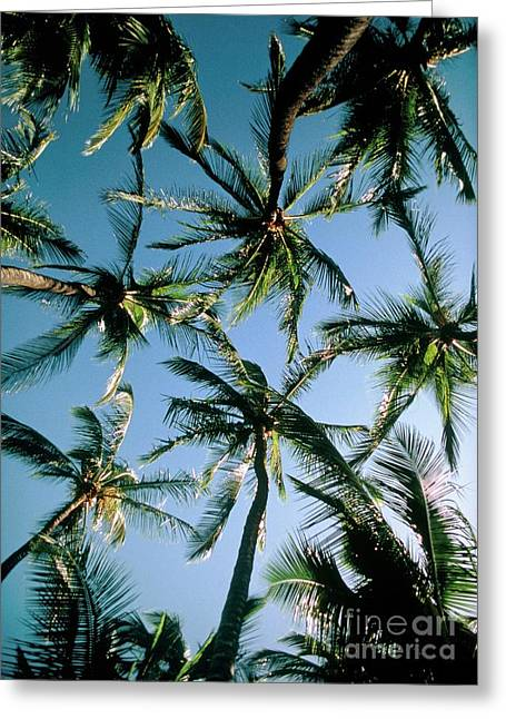 Coconut Palms Greeting Card by Magrath Photography