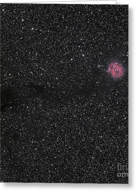 Cocoon Nebula Greeting Card by Phillip Jones