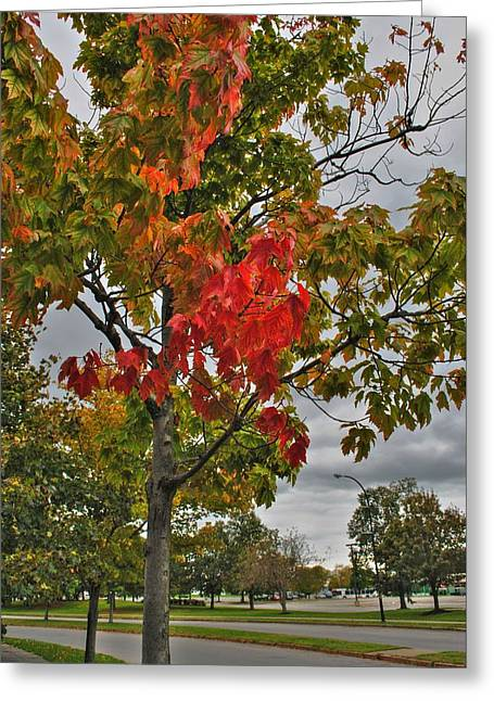 Greeting Card featuring the photograph Cold Autumn Breeze  by Michael Frank Jr