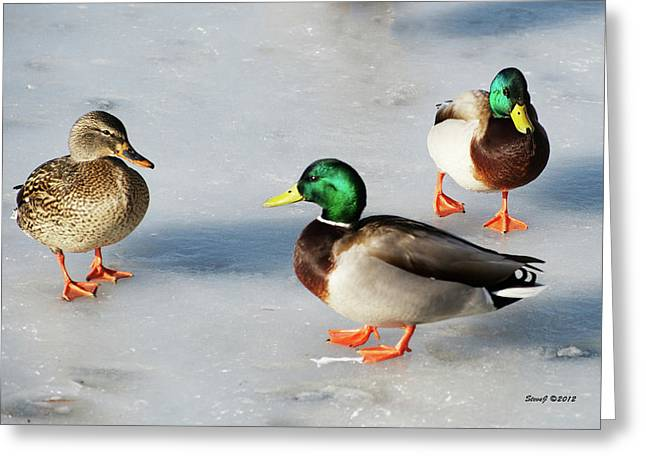 Greeting Card featuring the photograph Cold Ducks by Stephen  Johnson