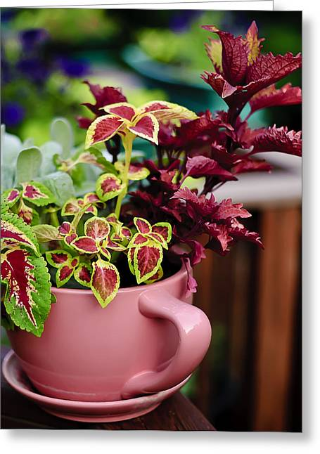 Coleus Collection Greeting Card by Michael Putnam