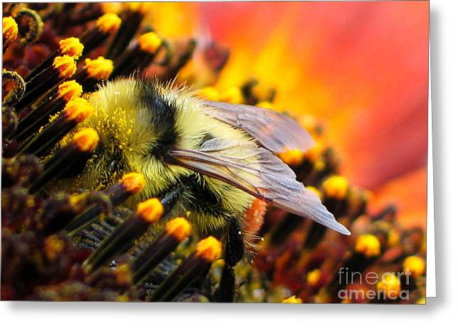 Collecting Pollen Greeting Card by Vivian Christopher