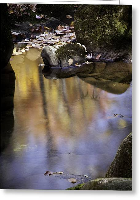 Color In The Water Greeting Card by Rob Travis