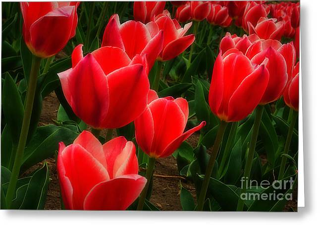 Color Me Red Greeting Card by Fred Lassmann