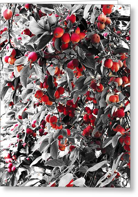Color Of Apples Greeting Card by Matt Lewis