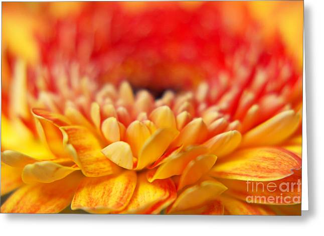 Color Of Summer II Greeting Card by Angela Doelling AD DESIGN Photo and PhotoArt
