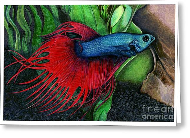 Color Pencil Of A Siamese Fighting Fish Greeting Card by Debbie Engel