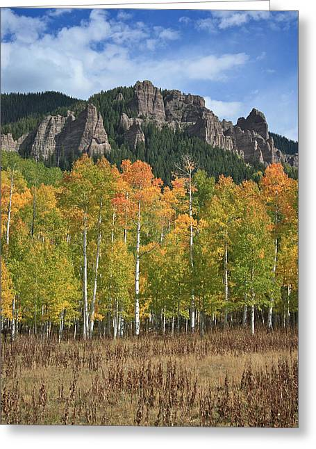 Colorado Aspens In Fall Greeting Card by Drusilla Montemayor
