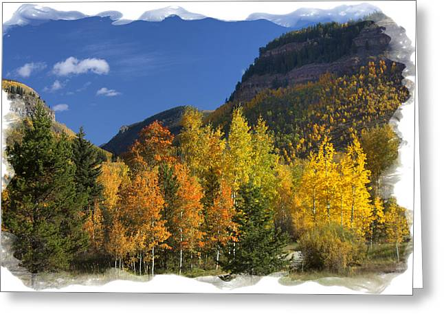 Greeting Card featuring the photograph Colorado Aspens by Judy Deist