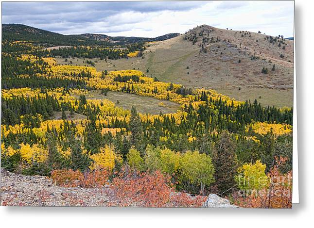 Colorado Autumn Aspens Colors Greeting Card by James BO  Insogna