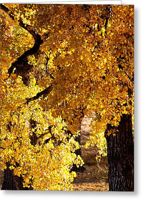 Colorado Gold Greeting Card