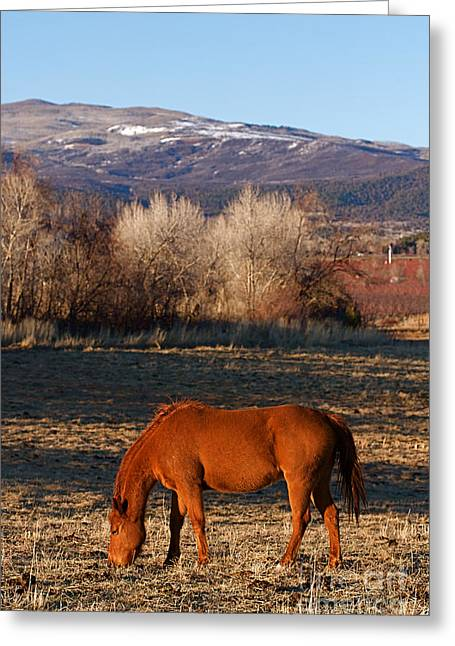 Colorado Horse Ranch At Sunset Near The Rocky Mountains Greeting Card by ELITE IMAGE photography By Chad McDermott