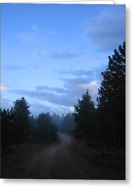 Colorado Pine Forest In Mist Greeting Card by Ric Soulen